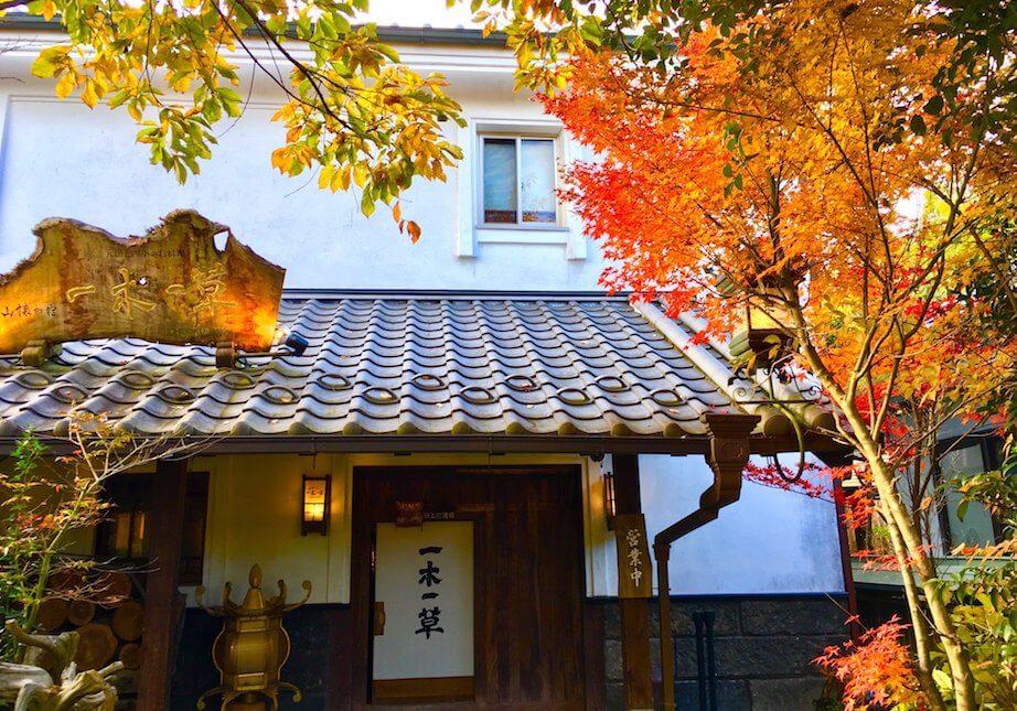 ichiboku-kouyou (1)